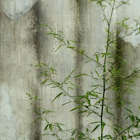 Concrete Wall with Bush