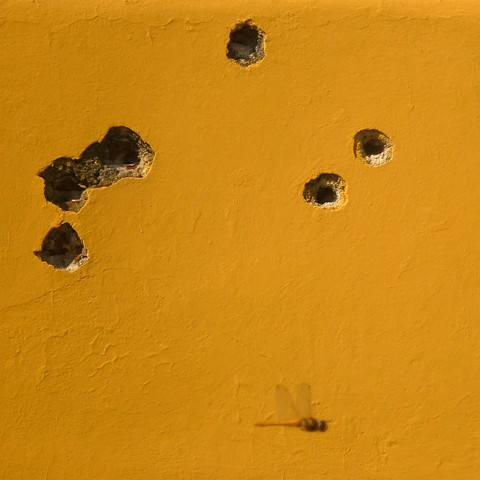 Wall with Bullet Holes and Dragonfly