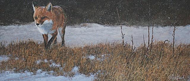 Red Fox winter hunt snow Wildlife Scott Hiestand