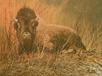Paynes Prairie Buffalo Acrylic painting Scott Hiestand