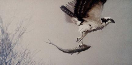 Florida Osprey Fishing Acrylic Painting Scott Hiestand