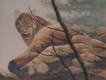 Florida Bobcat Acrylic painting Scott Hiestand