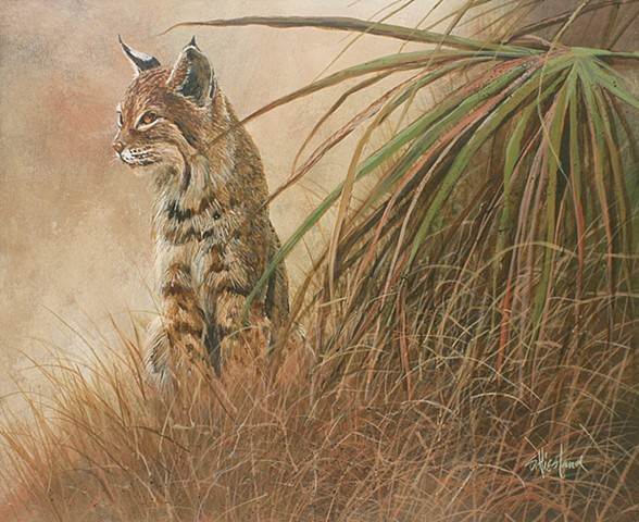 Wekiva Bobcat