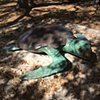 Edie the Sea Turtle