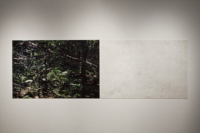 "Installation View, ""Clear Cut"" at Gallery 44: Centre for Contemporary Photography."