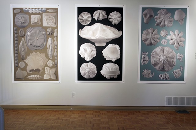 "installation shot of Karsh Masson exhibit ""Big Pictures/ Small Things"" left to right: (un)Natural curiosities Plate X various species of diatoms (a type of unicellular plant) (un)Natural curiosities Plate VIII various species of Rhizostomaeae (an order of"
