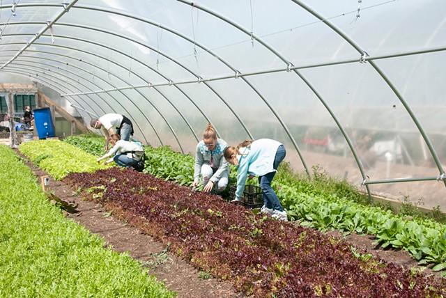 Polyculture - City Farm
