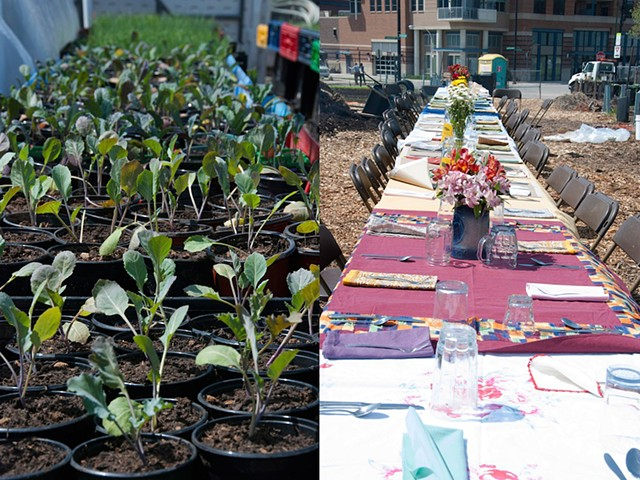 Polyculture - Setting the Table