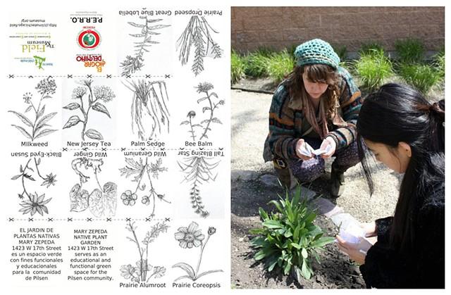 Native Plant Identification zines