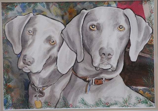 Our Weimaraners