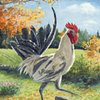 """""""White Rooster on Eastman Hill"""""""