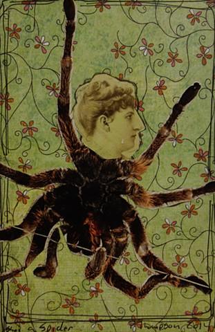 spider vicky - 2014