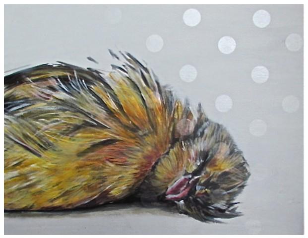 dead bird, sleeping bird, yellow bird, canary,