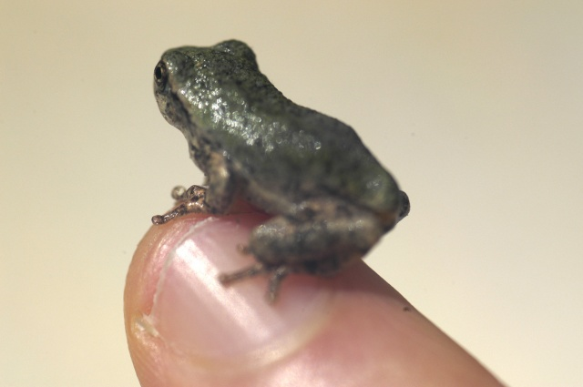 frog on finger