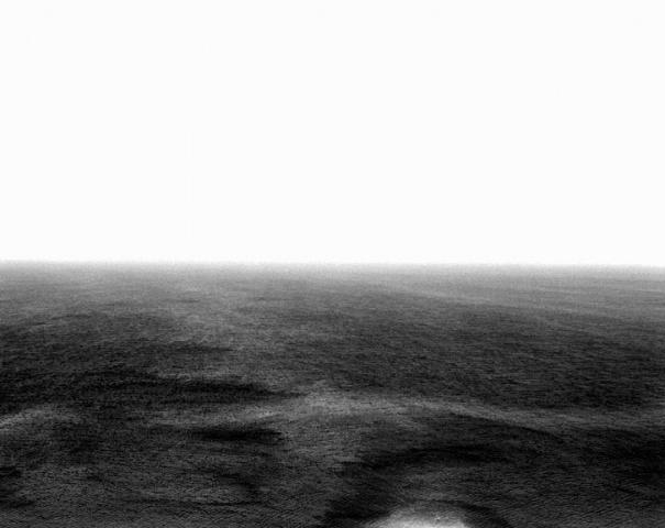Sea Salema