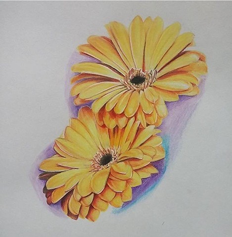 Lovecraft Tattoo, Charlotte Epright, Gerbera Daisy, Sketch, Floral Drawing