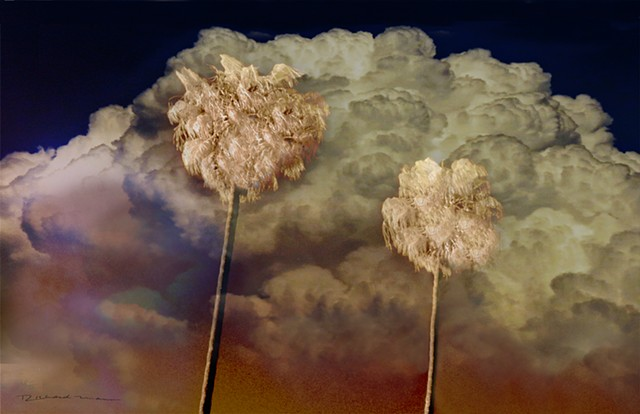 California Palm Trees recorded in infrared Photography by Richard Mann