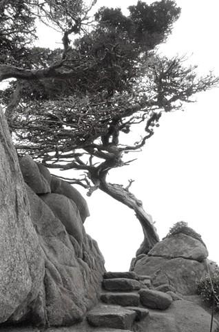Point Lobos #3