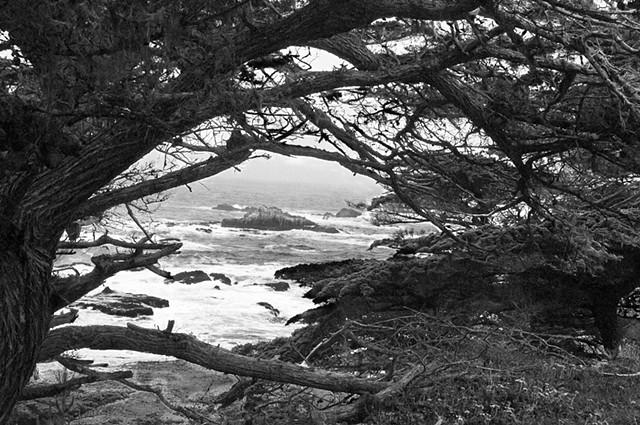 Point Lobos #1