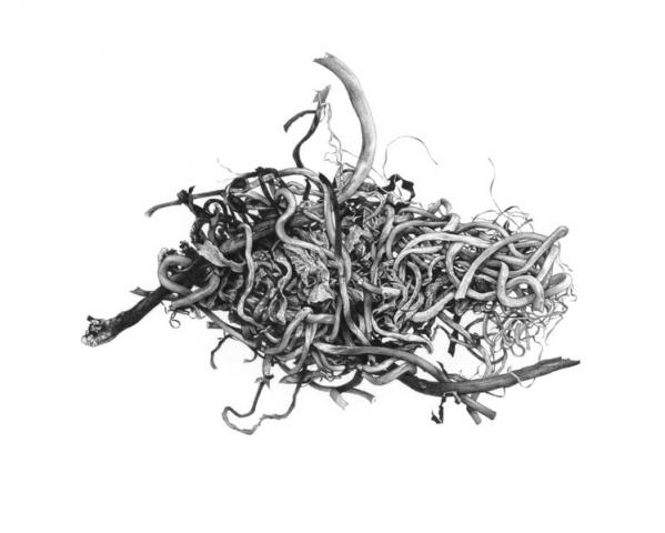Forsaken Articles: Sea Grass V