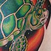 Turtle in space coverup