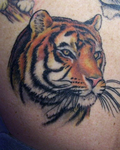 Ron Meyers - Color Tiger Head