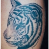Ron Meyers - tiger