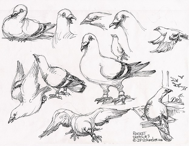 Rocket Pigeon preliminary drawing #3