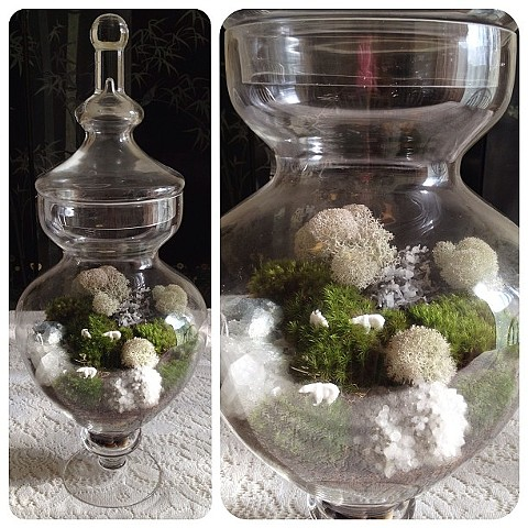 Enclosed Moss Terrarium