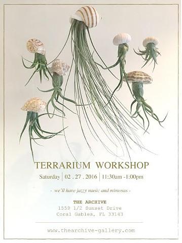 Jellyfish Air Plants  $6- $24