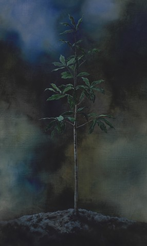 Oak Sapling in Moonlight