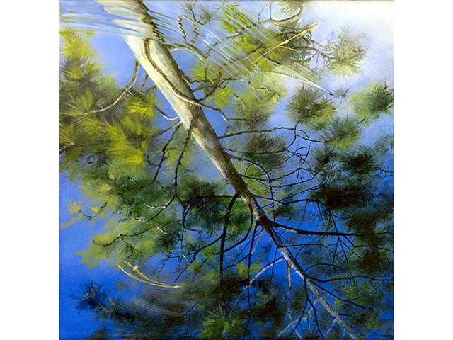 reflection of pine tree in water