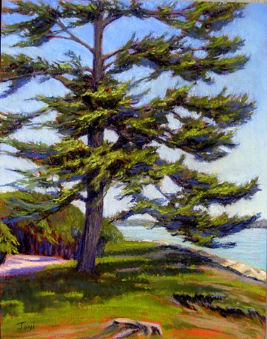 Pastel painting of a windswept pine at Bumpus Park in Duxbury, overlooking Duxbury Bay in front of the King Caesar House