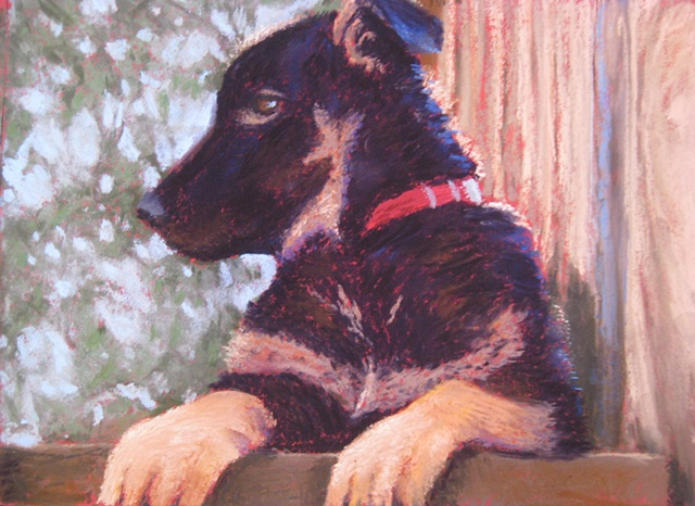 pastel painting, pet portrait, puppy, German Shepherd dog, dog portrait