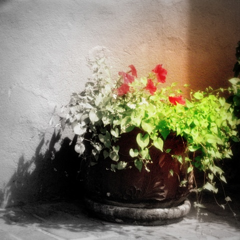 Terracotta pot, flowers, Santa Fe, patio flowers