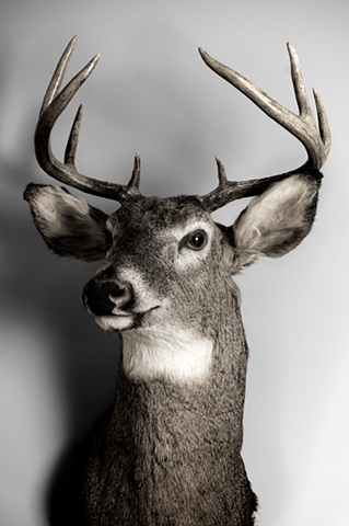 """""""I shot this buck down by Whalen"""""""