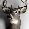 """I shot this buck down by Whalen"""