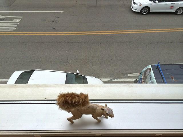 Squirrel on Ledge