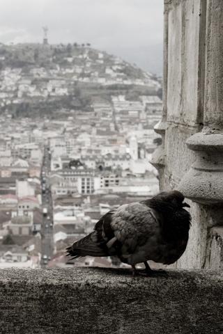 Pigeon atop Basilica