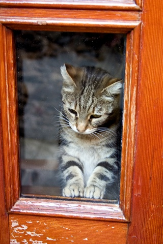 Kitty in Window