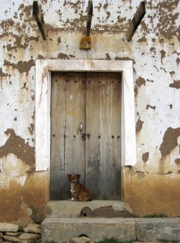 Perro Enfrente de Puerto
