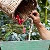 Sachamama Organic Coffee Farm