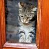 Kitty in Window