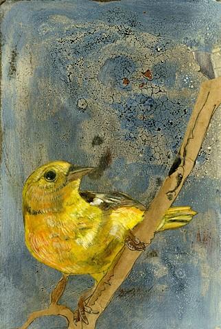bird painting illustration