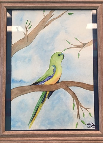 Orange Bellied Parrot by Kristen Porter