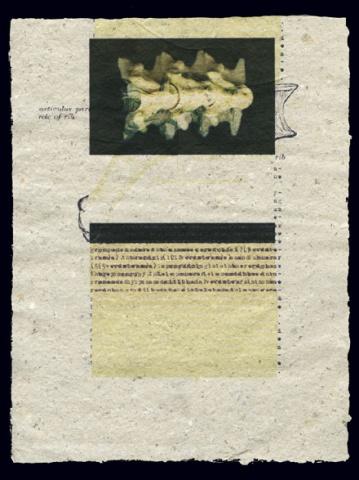 Document 20 (Vertical 2)