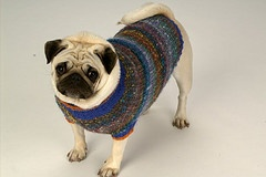 hand made dog sweater