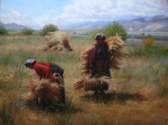 Tibetan Barley Harvest