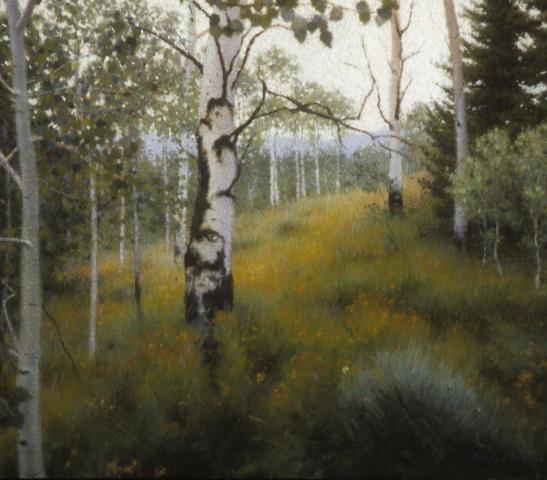 Wyoming Aspens