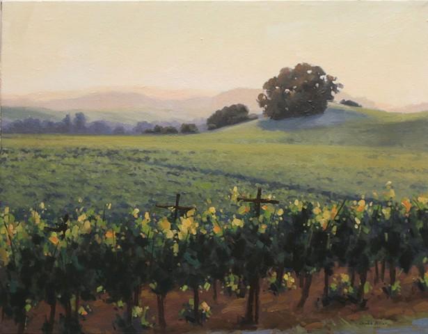 Evening Light in the Vineyard